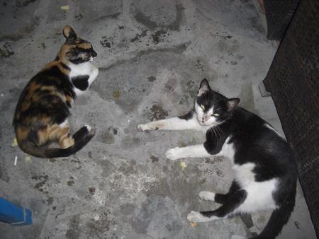 044– Fourni-Katzen