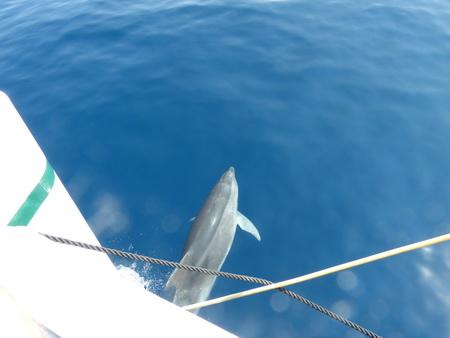 Delphine bei Kalymnos