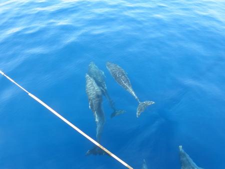 Delphine bei Kalymnos_2