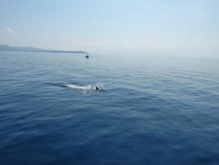 Delphine bei Kalymnos_3