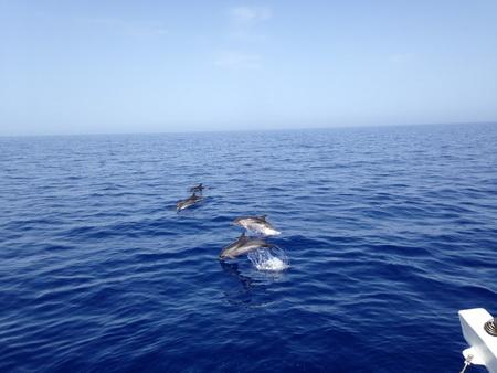 Delphine vor VAVA-U