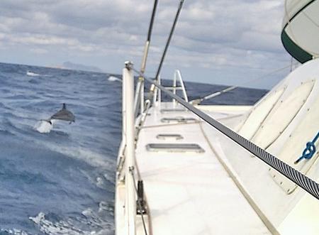 Delphine neben VAVA-U