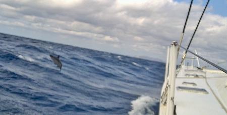 Delphine neben VAVA-U_2