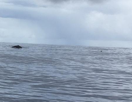 Karsten und Wal