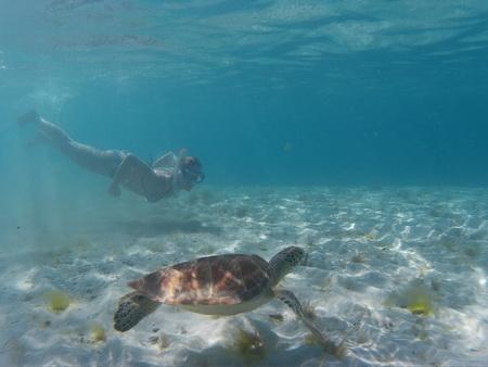schnorcheln mit den Schildkröten