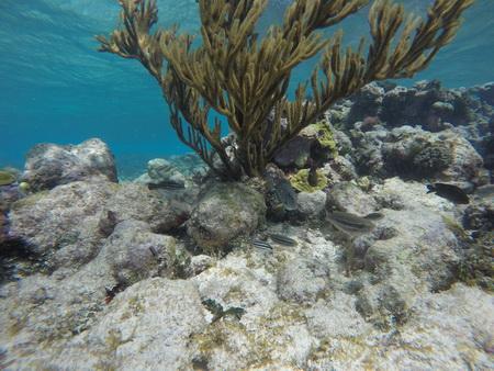Schnorcheln im Horseshore reef