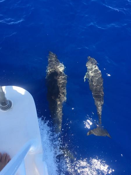 Segeln anch Antigua