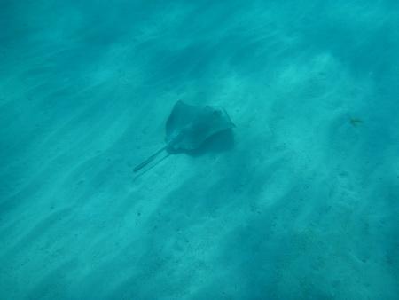 Schnorcheln in den Cays