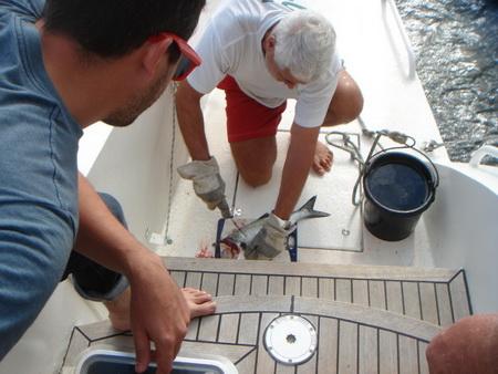 Fisch gefangen