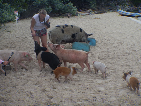 bahamas schweine ausflug