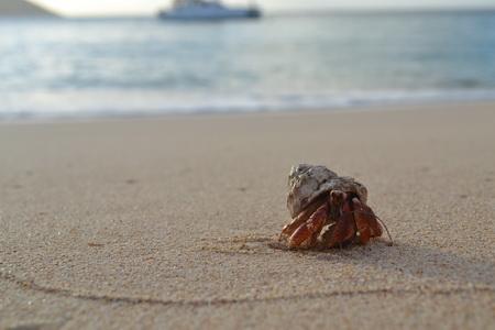 An Strand von Tintamarre-114