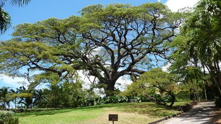 Ausflug auf Kitts-Botanische Garten-22
