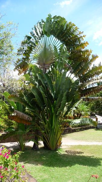 Ausflug auf Kitts-Botanische Garten-32