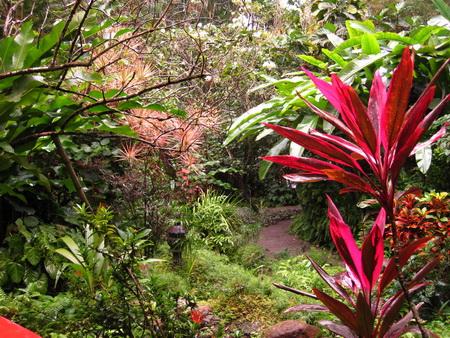 Botanischer GArten Soufriere_StLucia-5