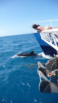 Delphine auf dem Weg nach Jost van Dyke-1110775