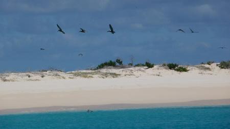 Dog Island_Anguilla-3