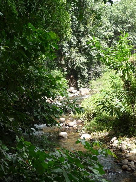 Dschungel-Fluss_1