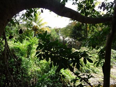 Dschungel-Fluss_2