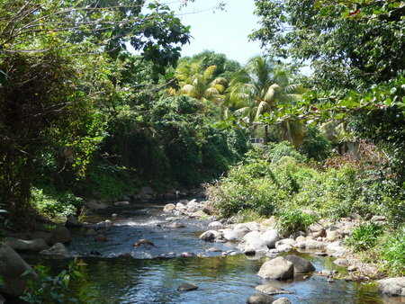 Dschungel-Fluss_3