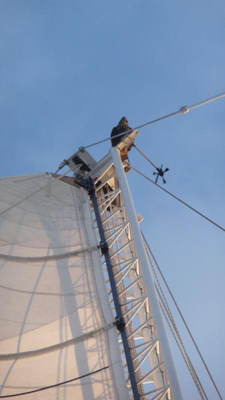 Falke an Bord