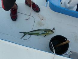 Fisch 2
