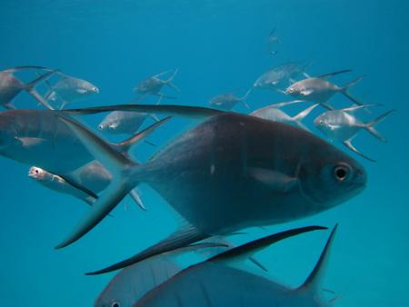 Fischschwarm Longue Bay-18