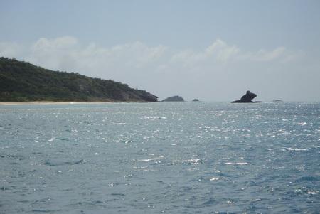 Frosch bei Deep Bay