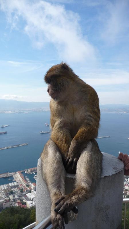 Gibraltar-50