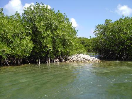 Lagoone-Barbuda