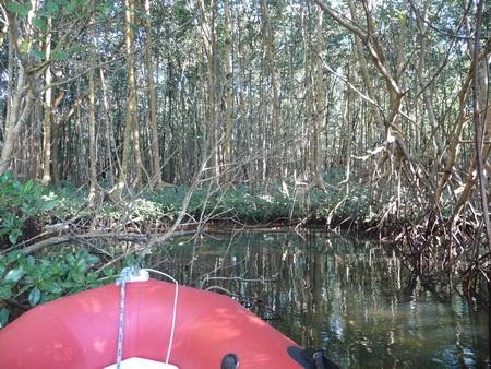 Mangroven-2