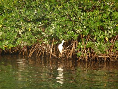 Mangroven-Bewohner