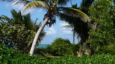 Prickly Pear_Anguilla-5