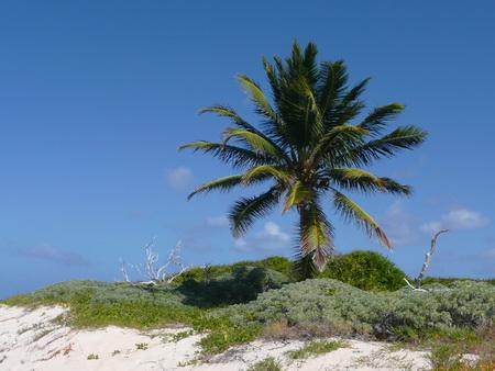 Prikly Pears Island-1200480