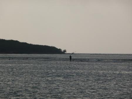Reede Palenque