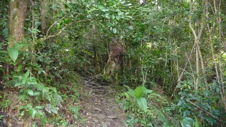 Regenwald-Wanderung auf Tortola-1110786
