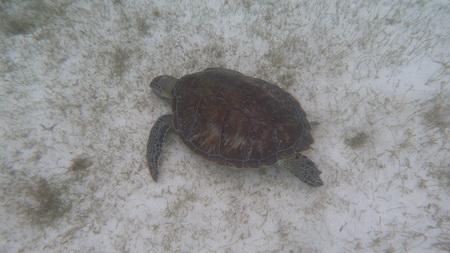 Schildkröte1040263