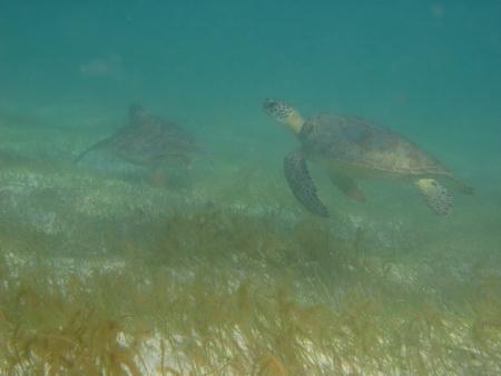 UW-Schildkröten