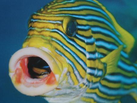 Unter Wasser-1