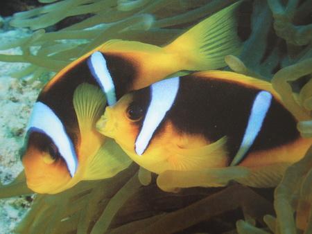 Unter Wasser-2