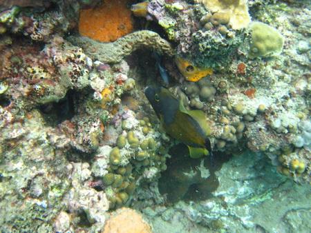 Unter Wasser in Soufriere
