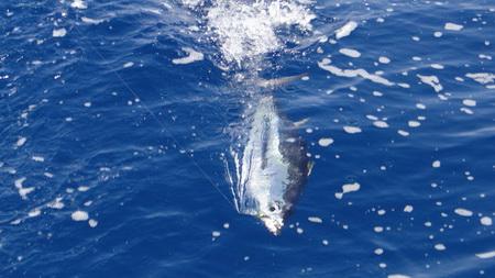 Angeln - fast wieder Thunfisch